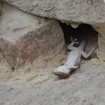 Zoo Drážďany spící ještěrka video