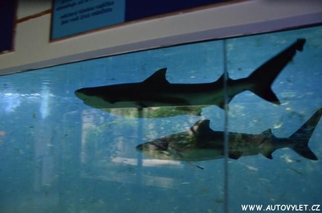 Zoo Hodonín žraloci