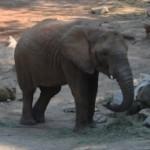 Zoo Lešná Zlín je nejkrásnější v ČR
