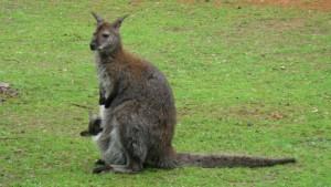 zoo ohrada hluboká nad vltavou