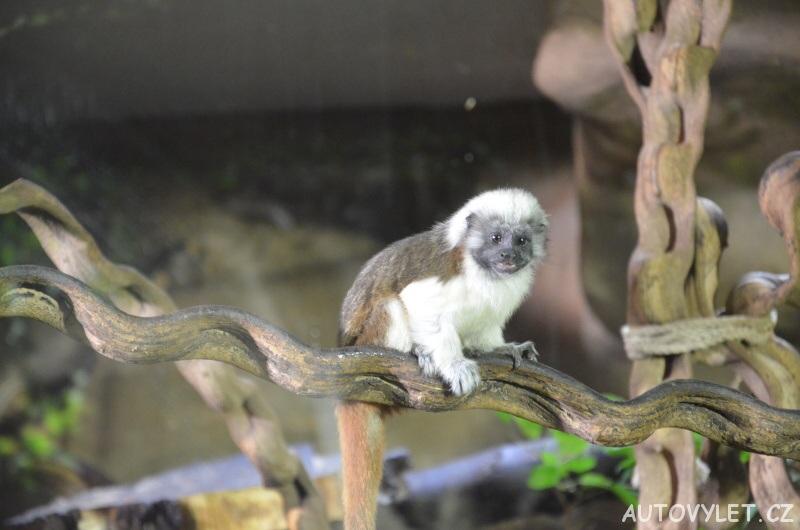 zoo ostrava opice