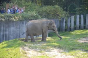 zoo ostrava slon