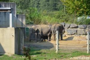 zoo ostrava slůně - sloni