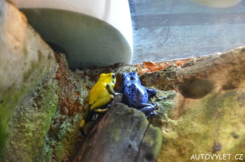 zoo ostrava žáby