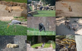 zoo praha 5 nej zoologická zahrada na světě