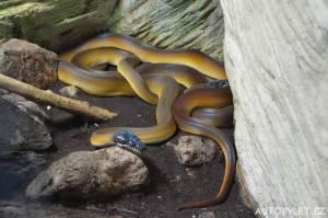 zoo praha had