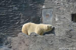 zoo praha lední medvěd