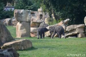 zoo praha sloni