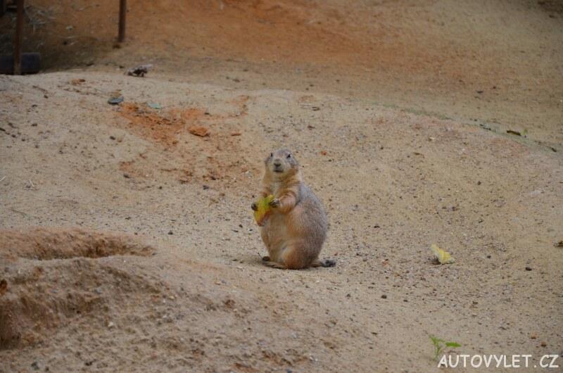 zoo praha svišť