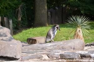 zoo praha tučňák