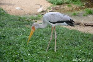 zoo praha volavka
