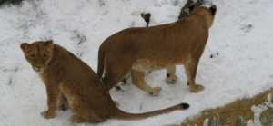 zoo usti lvi v zimě