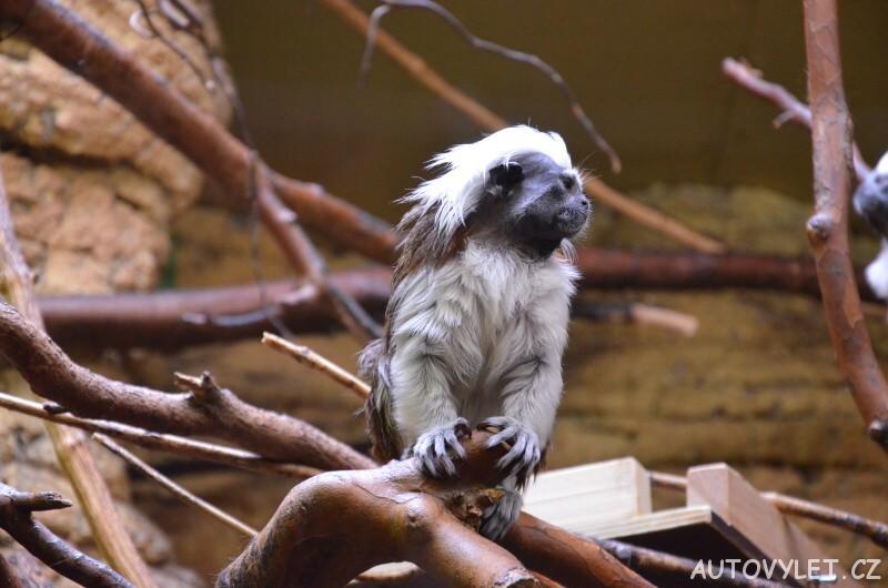 Opice - Zoo Ústí n L