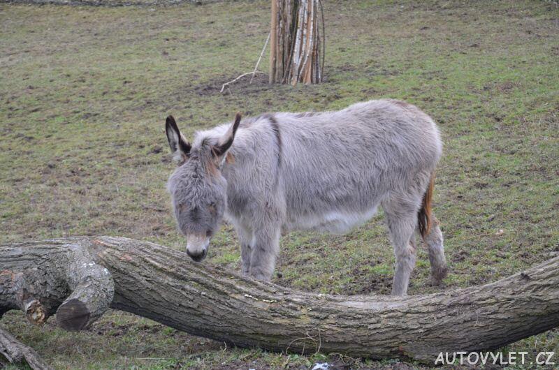 Osel - Zoo Ústí n L
