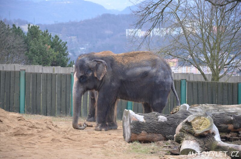 Slon - Zoo Ústí n L