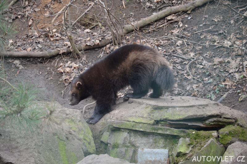 Rosomák - Zoo Ústí n L