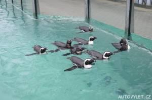 Tučňáci - Zoo Ústí n L