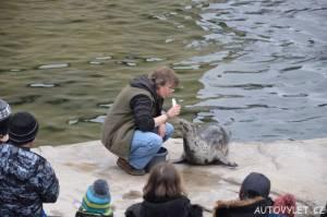 Krmení tuleňů - Zoo Ústí n L