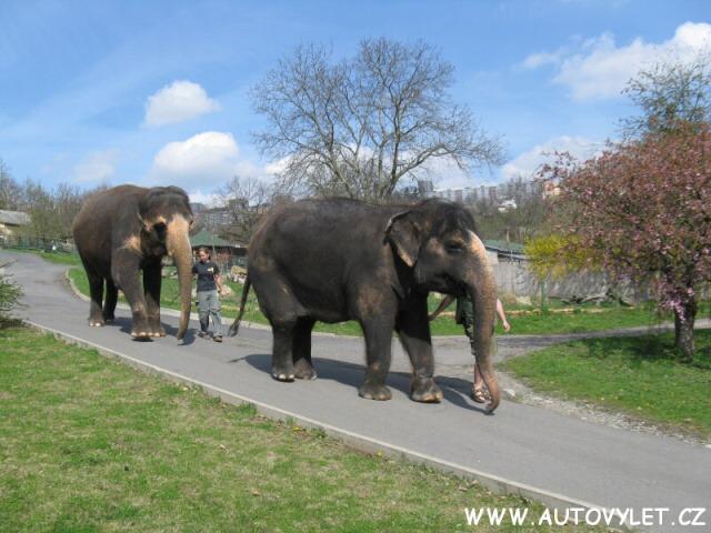 Zoo Ústí nad Labem sloni