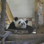 Zoo Vídeň je nejstarší zoologická zahrada na světě