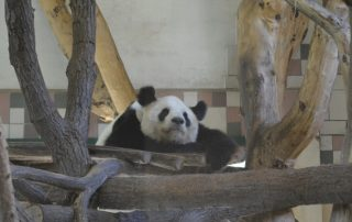 Zoo Vídeň
