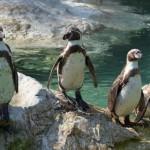 Největší i nejmenší zoo v České republice