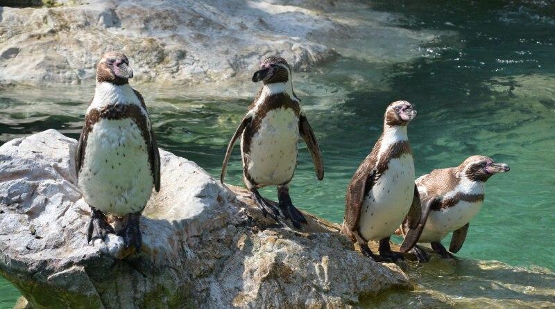 Zoologické zahrady v České republice