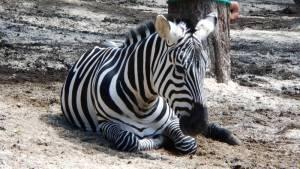 zoopark berousek doksy