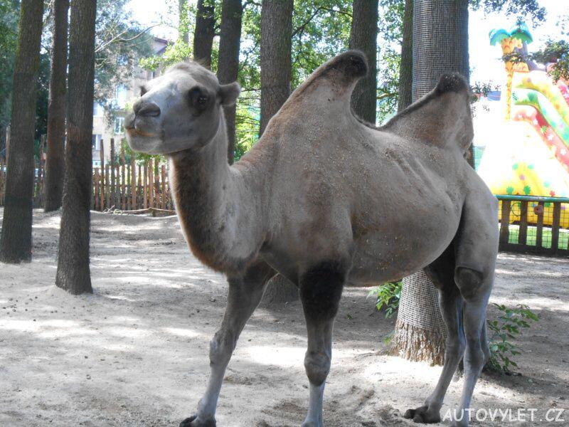 zoopark berousek doksy 3