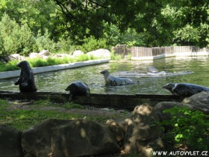 Zoopark Chomutov tuleni