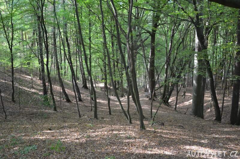 Zřícenina hradu Vrabinec - cesta lesem